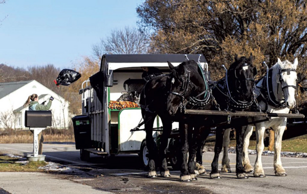 Vermont Draft Trash - Compost Pick Up by Horse