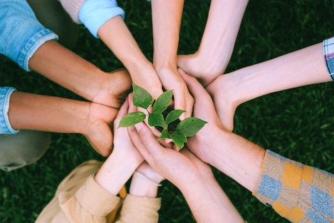 Many Hands Holding a Sapling