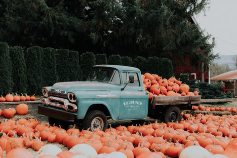 Pumpkins with a blue truck