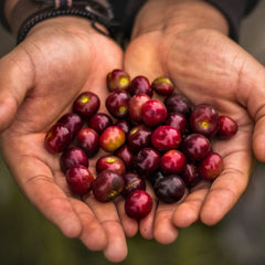 SINGLE ORIGIN: EL SALVADOR, CHATENANGO, FINCA LIQUIDANBO