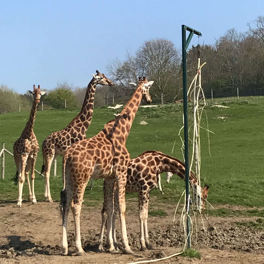 Welcome to our very first ExplorerBlog post! First up is Port Lympne Reserve & Hotel, Kent, UK