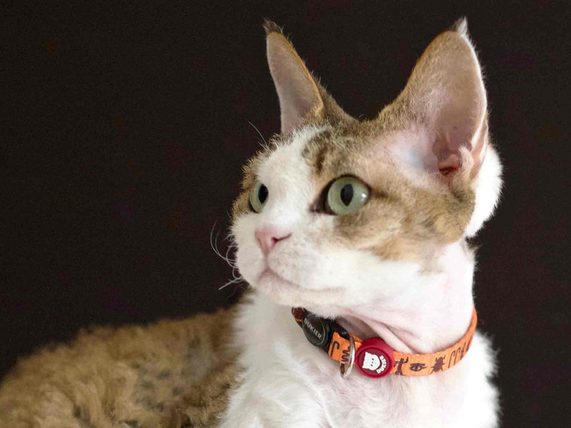 COLLIER EGYPTE POUR CHAT