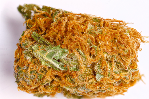 Orange Bud | CBD <  12,5% <  THC 0,5 % |