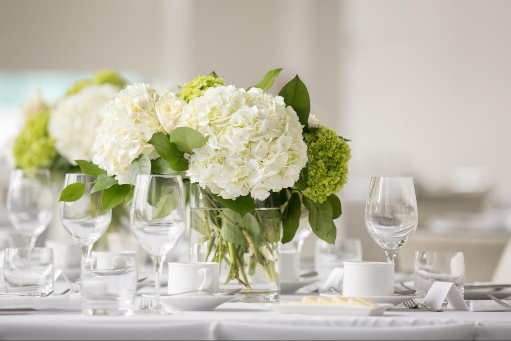 All About Hydrangeas - Name, History & Symbolism