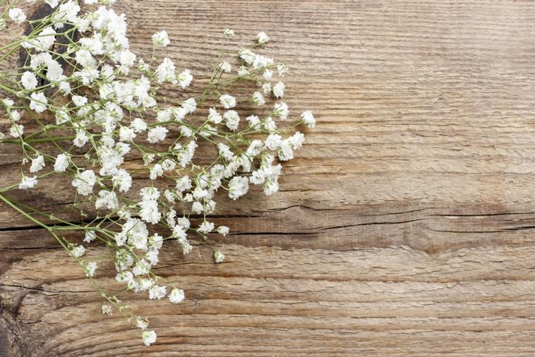 Baby Breath Flowers and how it got its name
