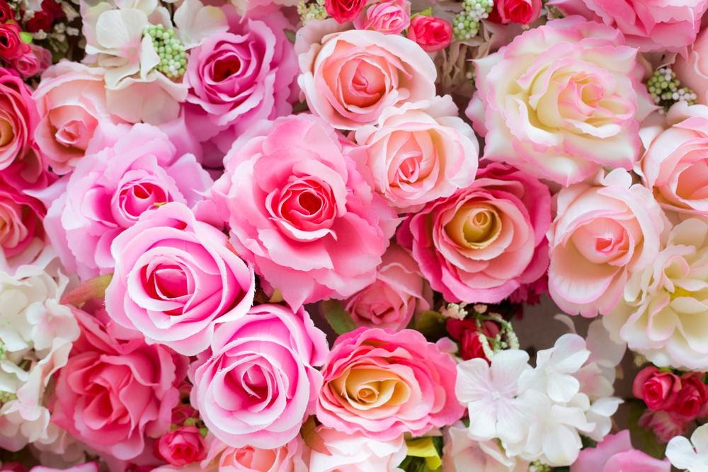 Rose Colour Meanings and What They Symbolise
