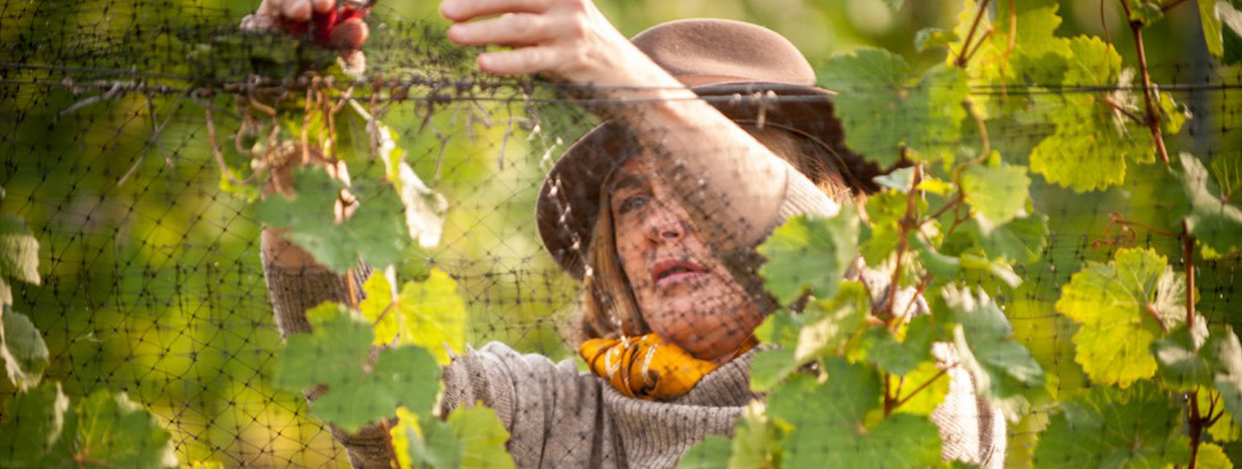 Owner Heidi Noble in the vineyards of JoieFarm