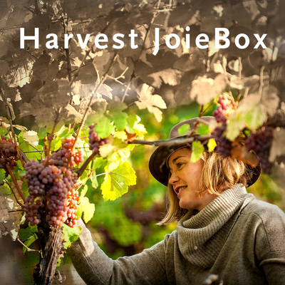 Harvest JoieBox 6-pk<br> Travelzoo EXCLUSIVE