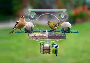 Premium Bird Feeder Collection