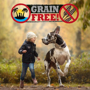 Grain Free Dog Food - Is it good, Is it bad - Should you stop?