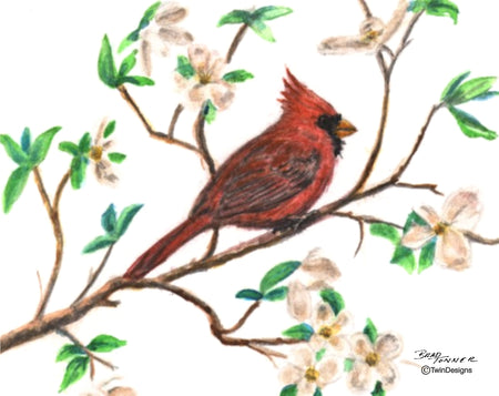 Cardinal in a Dogwood Tree Note Cards