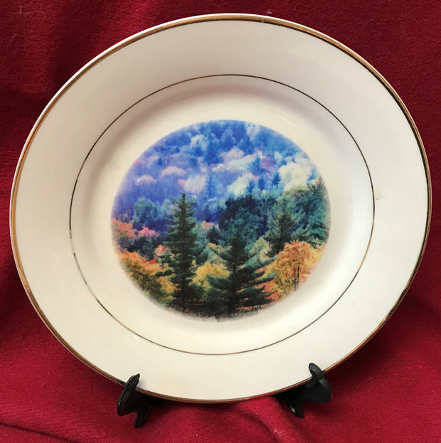 """Fall Trees"" 8""  China Plate featuring an original photograph by Jim Tonner"