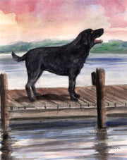 Dog on the Dock Note Cards