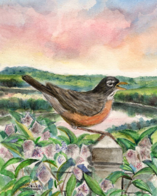Early Morning Robin Note Cards