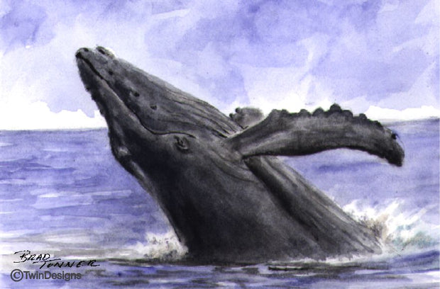 """Whale"" Note Cards Original Watercolor by Brad Tonner"