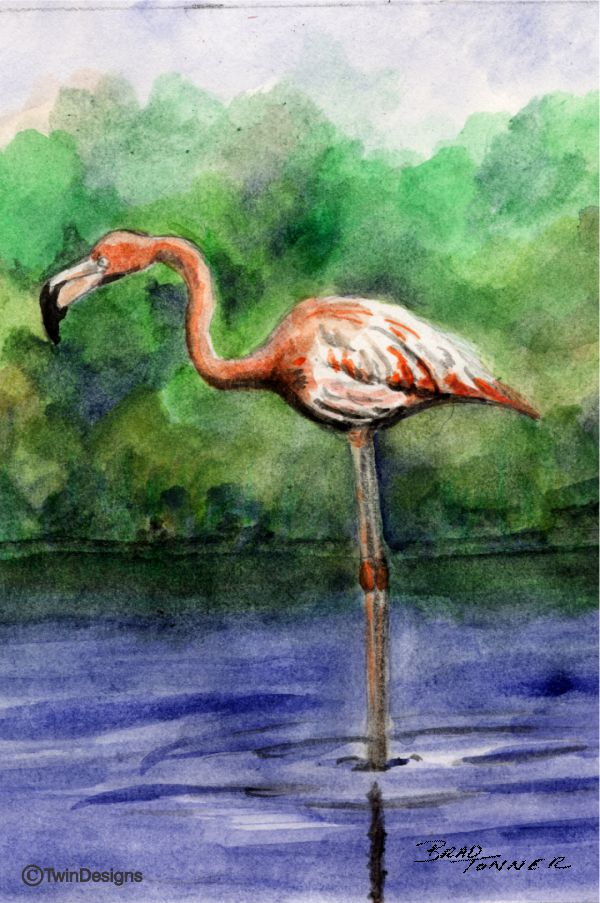 """Flamingo"" Note Cards of Brad Tonners Original Watercolor"