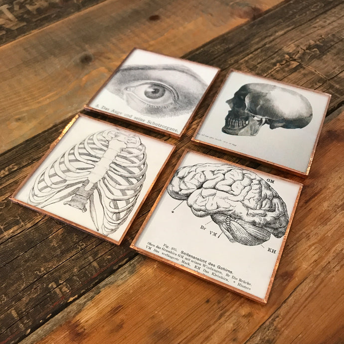 Anatomy Coaster Set