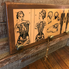 Anatomy Drawer Front