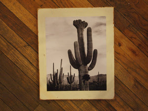 Crested Saguaro Cabinet Door