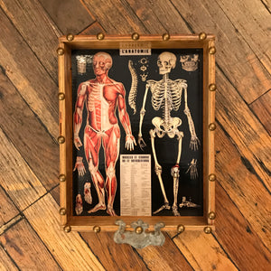 Anatomy Shrine