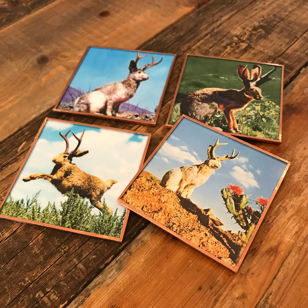 Jackalopes Coaster Set