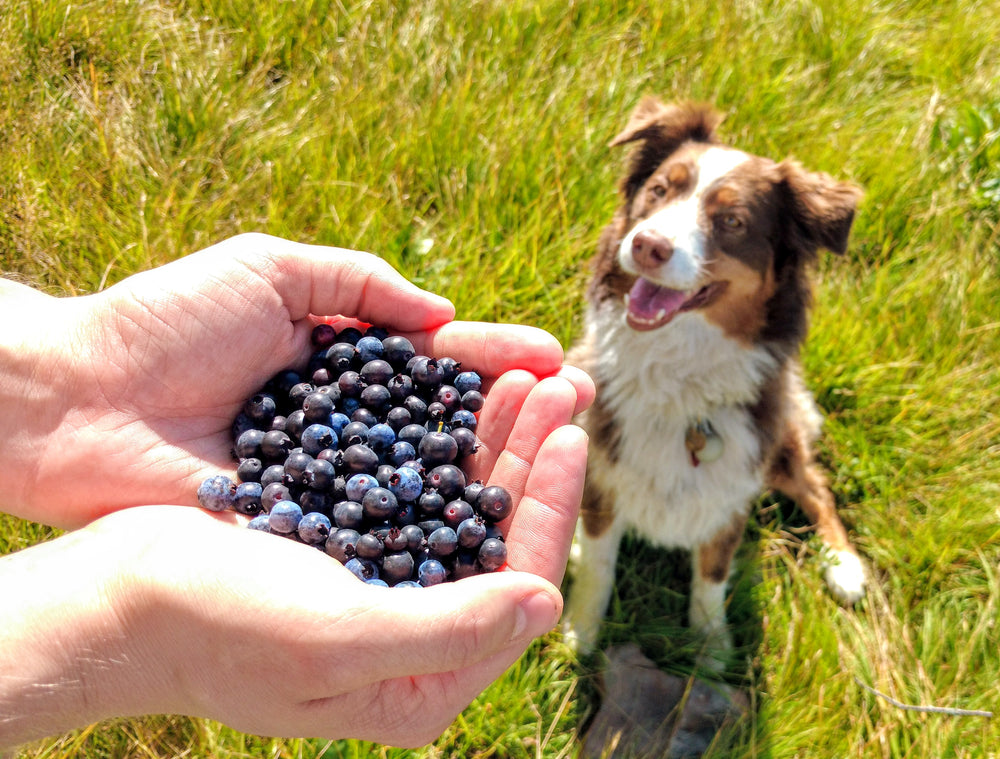 Dog Supported Agriculture (DSA)
