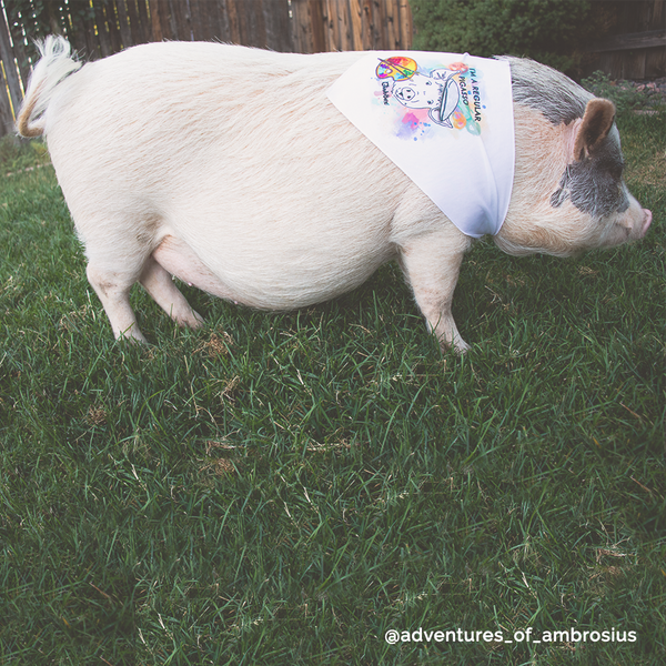 "LIMITED EDITION 36"" Piggy Pigasso Triangle Bandanna"