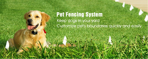 4 Reasons to LOVE Wireless Fences for your Pets