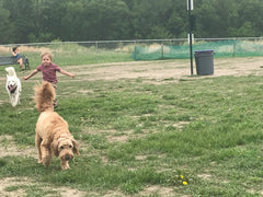 Dog Parks: Good for your dog and your family!