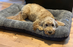 Environmentally friendly & Made in the USA Dog Beds from West Paw