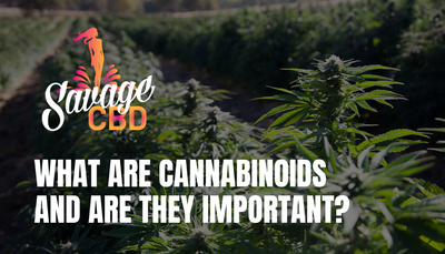 What Are Cannabinoids and Are They Important?