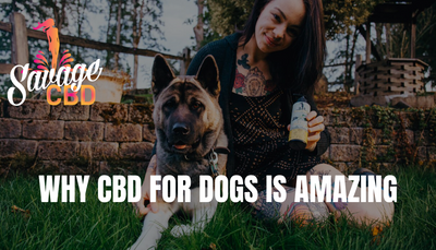 Why CBD for Dogs is Amazing