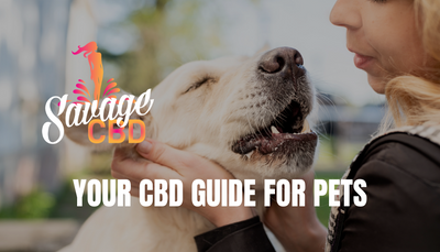 Your CBD Guide For Pets