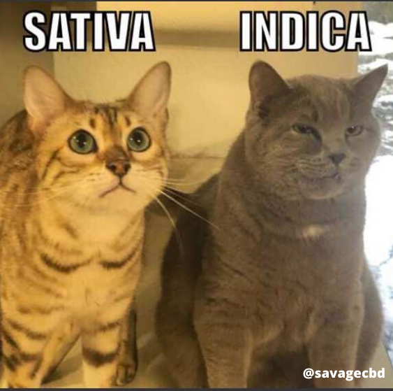 Sative and Indica Meme