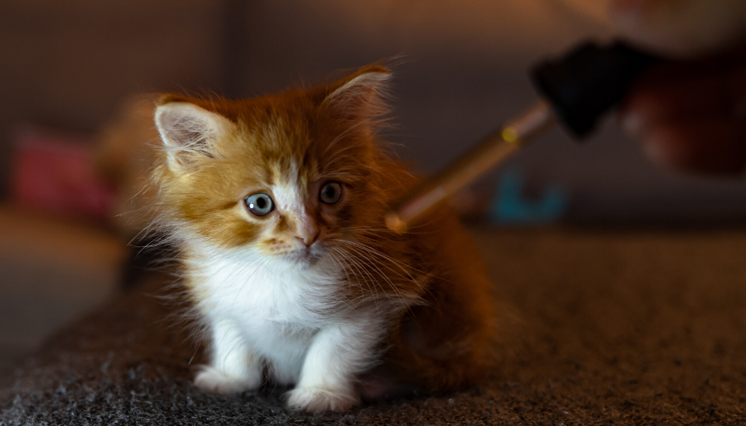 Deciding To Give Your Pet CBD