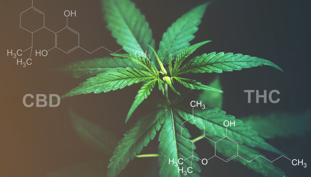 Is There A Delta-8 THC CBD?