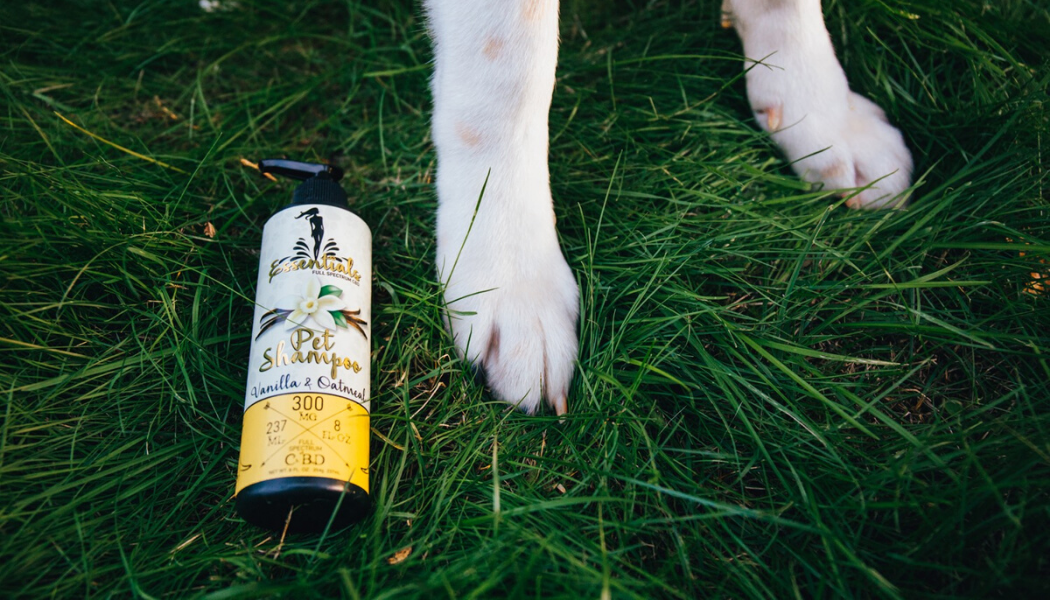 Questions to ask your vet about CBD