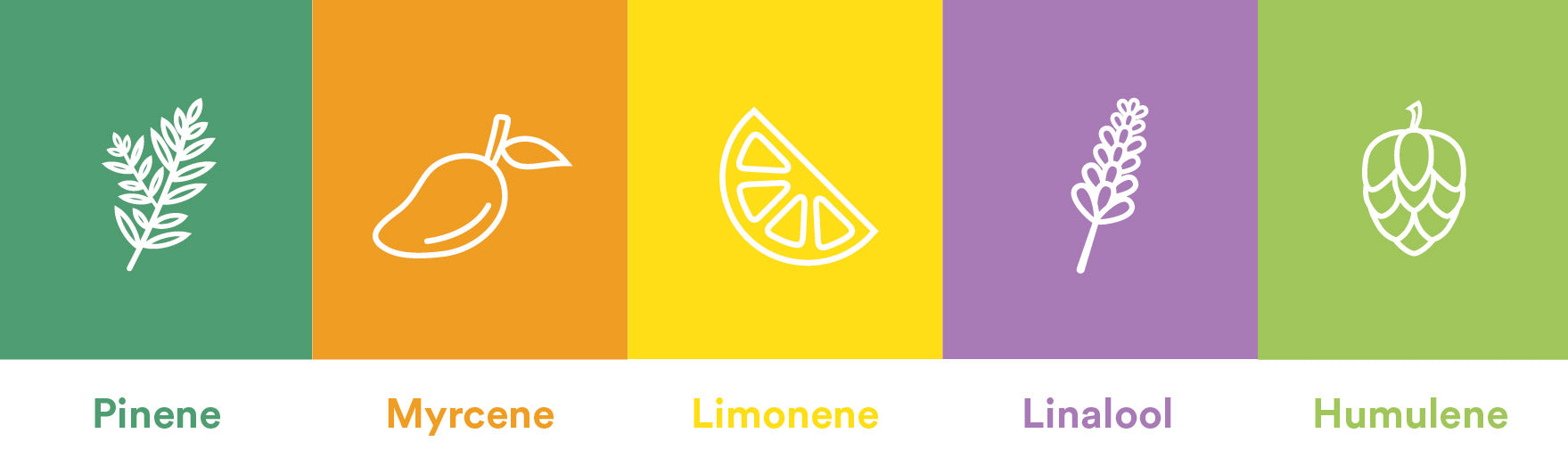 A Brief Overview of Terpenes