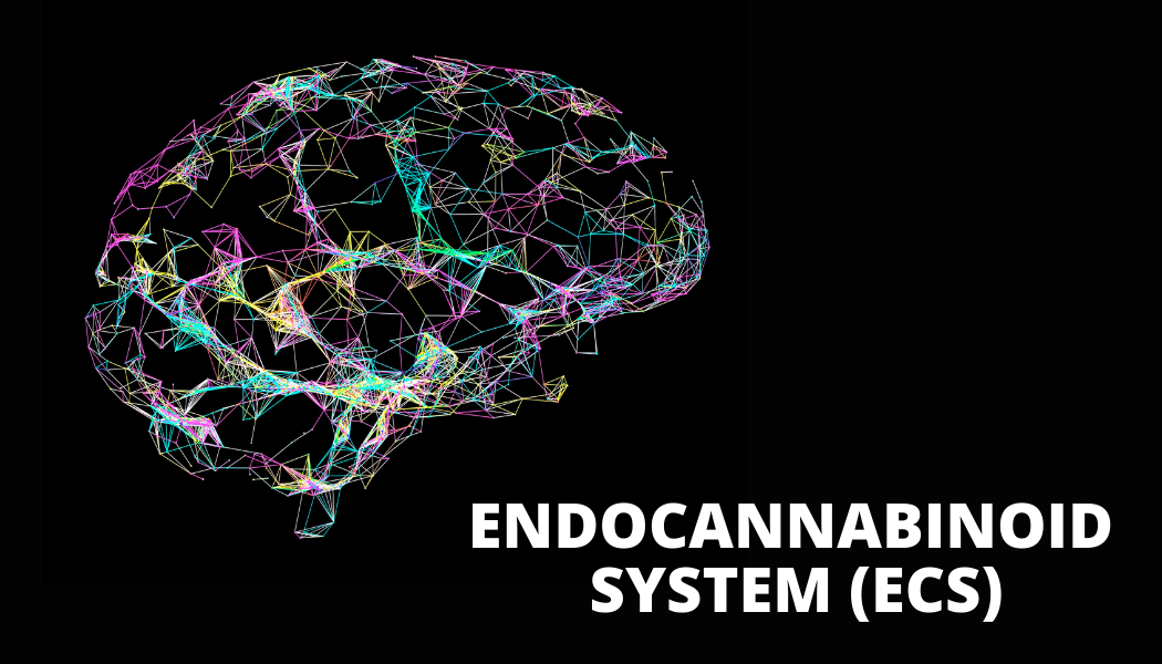 The Role of the Endocannabinoid System