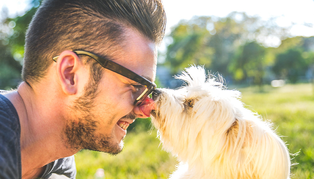 Dogs, Fireworks, and CBD - Conclusion