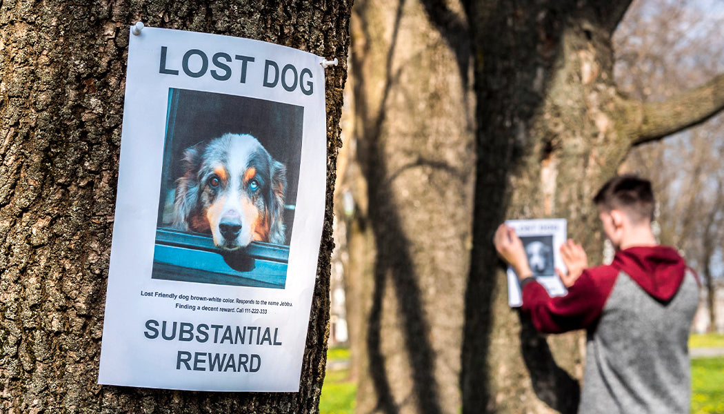 Why Dogs Go Missing