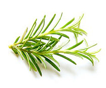 Infused Olive Oil -  Rosemary