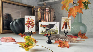 A tableau vivant of autumnal leaves, wild turkey and flint maize Mr. P's place cards