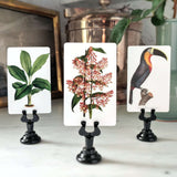 Tropical Foliage place cards paired with Toucan cards