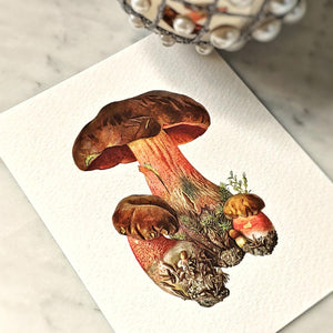 The Punctilious Mr. P's 'boletus beauties' mushrooms note card pack