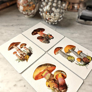 Single Personalized Note Card: Boletus Beauties