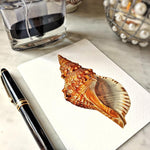 The Punctilious Mr. P's 'octopodes & conch' personalized note card showing a beautiful red conch shell illustration