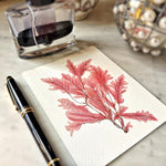 The Punctilious Mr. P's 'Red Seaweed & Coral' note card pack showing red sea weed