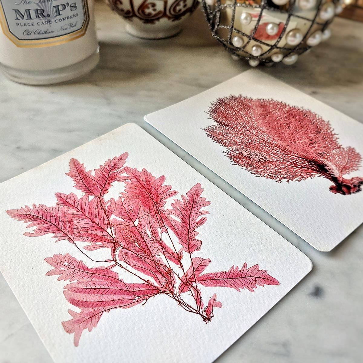 The Punctilious Mr. P's 'Red Seaweed & Coral' note card pack showing both red sea fan and seaweed