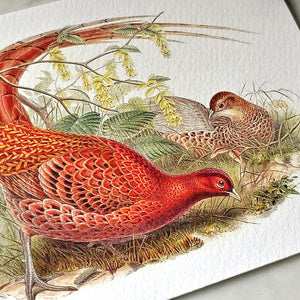 showing a close up detail of the pheasant on a Mr. P's note card